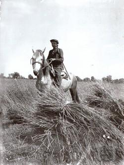 Охорона зерна від голодних селян. territoryterror.org.ua