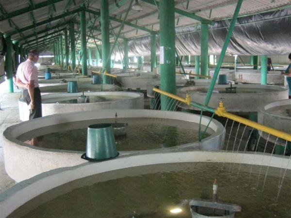 Дніпровський осетровий рибовідтворювальний завод нагадує науковий центр