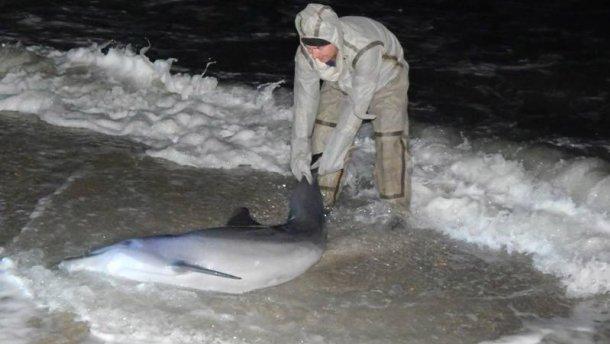 Порятунок дельфіна / Facebook